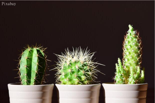 5 Tipps Für Schöne Zimmerpflanzen Freie Presse